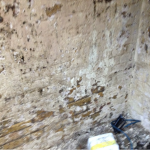 mould-remediation-hydro-dynamix-kent-00011